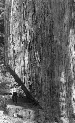 Sequoia, Small Man Big Tree