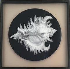 Set of 4, Coral Interior Artwork