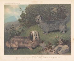 Skye Terriers, English Victorian dog chromolithograph, 1881
