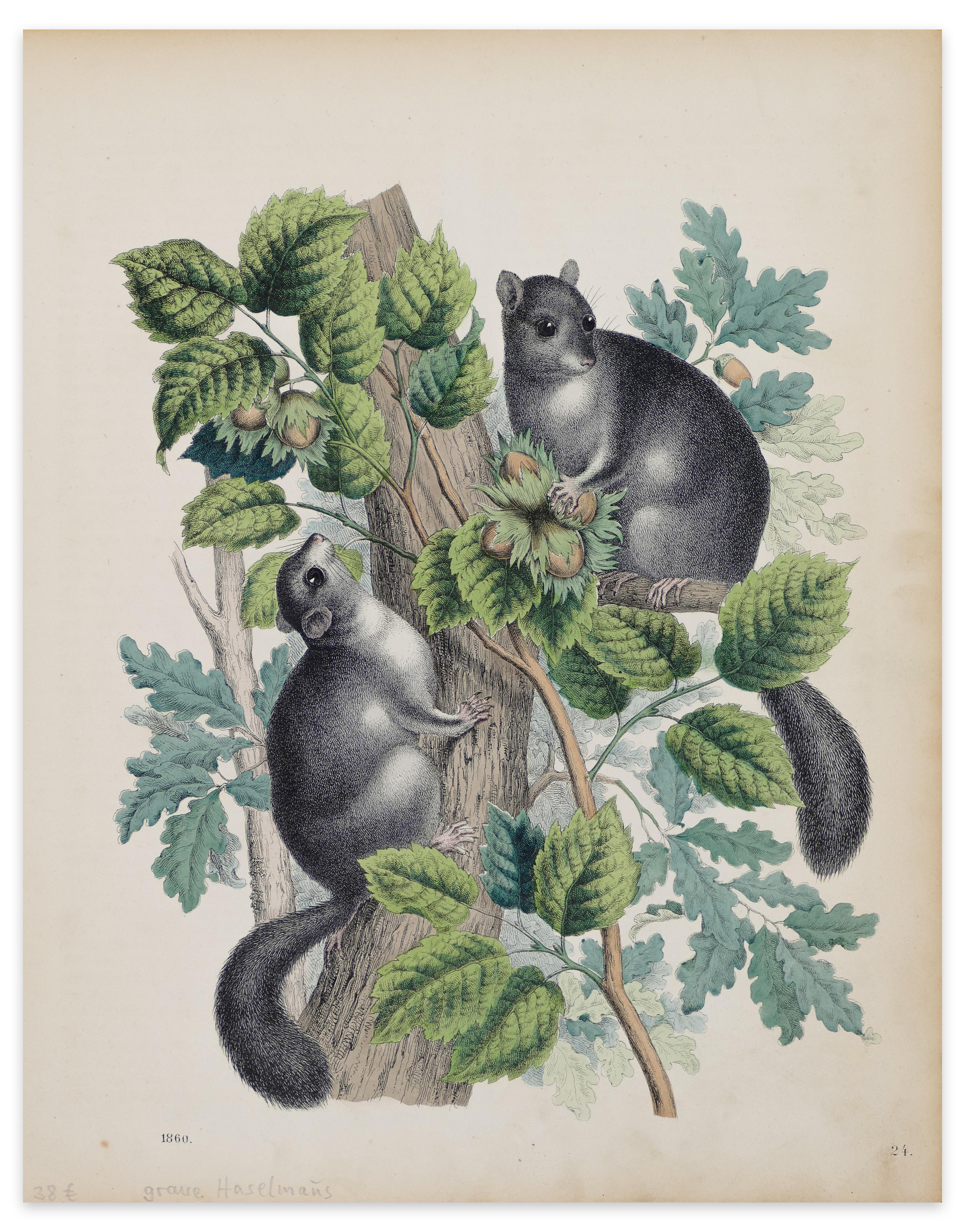 Squirrels with Hazelnuts  - Original Lithograph - 1860