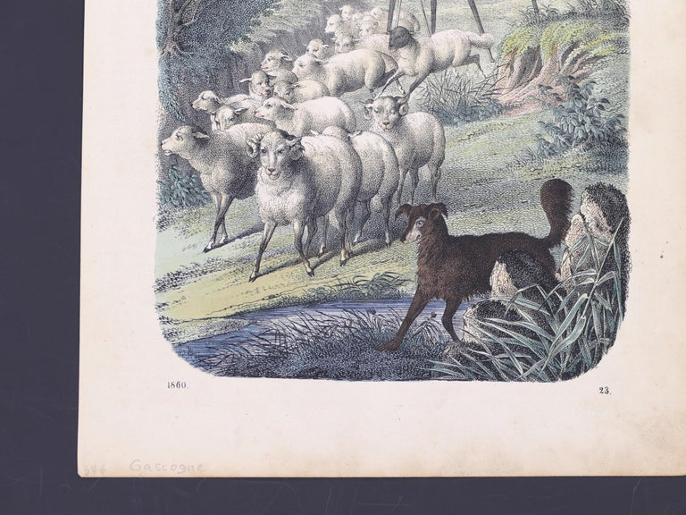 Stilt-Walking Shepherds - Original Lithograph - 1860 - Gray Animal Print by Unknown