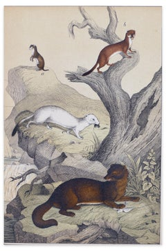 Stoats on a Rock - Original Lithograph - Late 19th Century