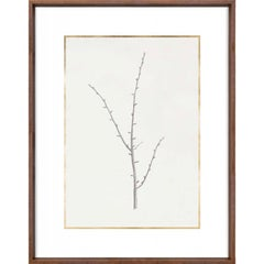 Taccani Branches, No. 2, gold leaf, silkscreen, framed
