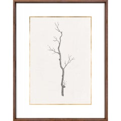 Taccani Branches, No. 3, gold leaf, silkscreen, framed