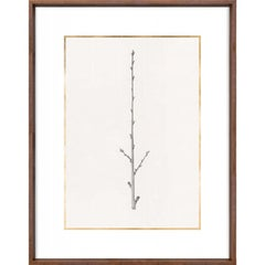 Taccani Branches, No. 4, gold leaf, silkscreen, framed