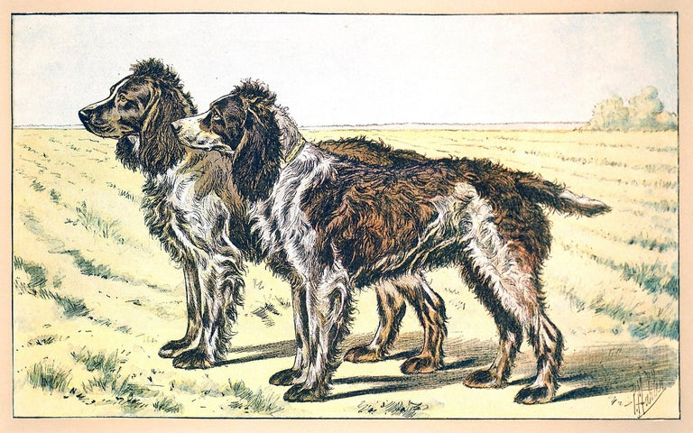 The Pont-Audemer Spaniel - Print by Unknown