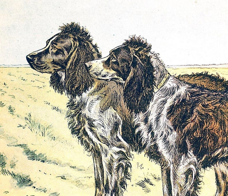 The Pont-Audemer Spaniel - Realist Print by Unknown
