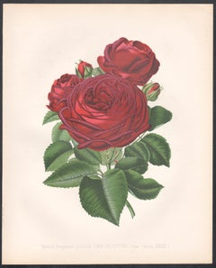 A pair of Victorian English Red Rose botanical flower chromolithographs, c1880