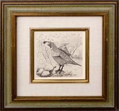 Two Quail, Ornithology Illustration Print