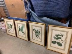 Vintage Botanical Prints ; Engelmann Graf Coindet & Co , Set of 4