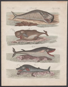 Whales, a series of 3 engravings with original hand-colouring, circa 1815