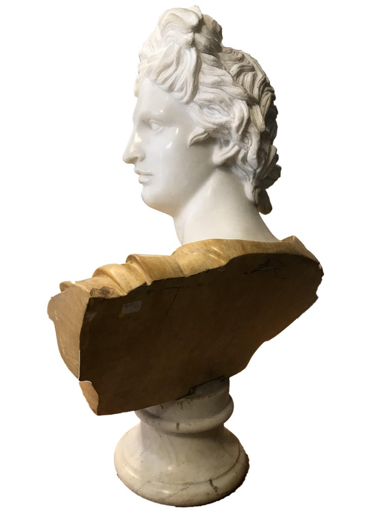 Bust of Apollo - Carrara Marble and Yellow Marble by Unknown Master Early 1900 For Sale 2