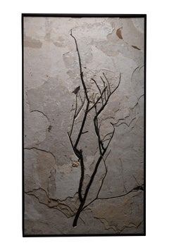 Elegant Branch Fossil Wall Piece from the Green River Formation