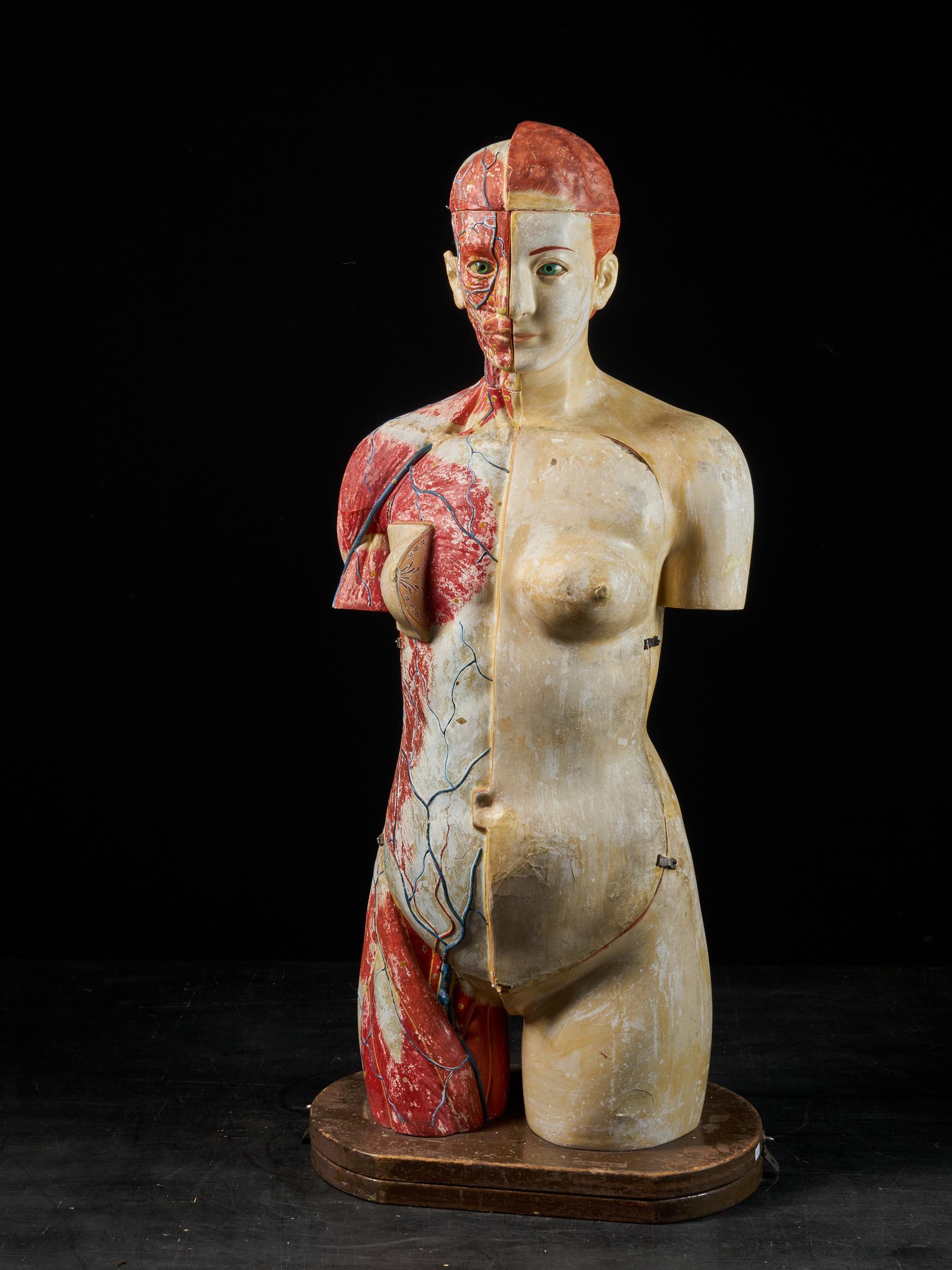 Female Life-size Anatomical Écorche Torso Model,Shimadzu Company, Japan
