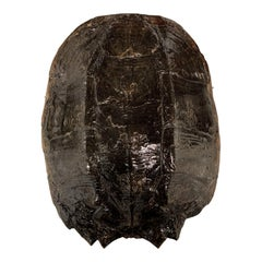 Real Turtle Shell Wall Sculpture