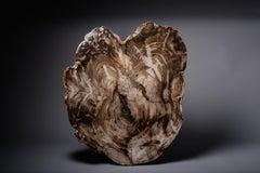 Spectacular Petrified Incense Cedar Wood Fossil