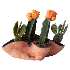 Untitled Handmade Clay Planter with Cacti Assortment Unique Edition