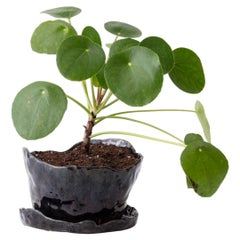 Untitled Handmade Glazed Stoneware Planter Unique Edition with Pilea