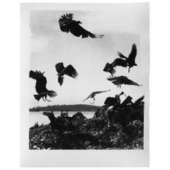 Untitled P-92, Silver Gelatin Print