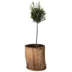 Urn Planter Wood Large, Swedish, 19th Century, Sweden