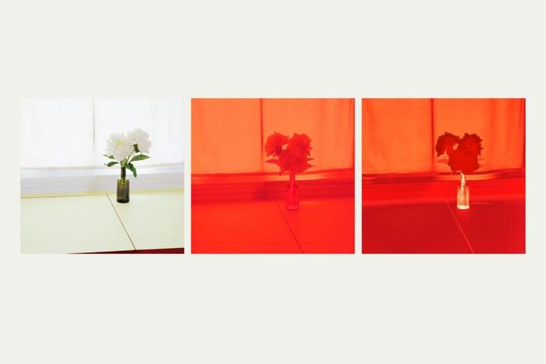 Uta Barth Color Photograph - Untitled (2005.A)