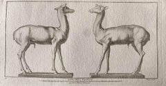 Animal Figures of Ancient Rome - Original Etching by Various Old Masters - 1750s