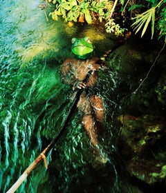 Congo Frog - 21st Century Landscape Portrait Animal Photography Edition