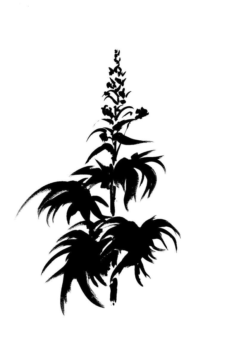 Botanical Study · Delphinium #1_Edition 1 of 10 For Sale 2