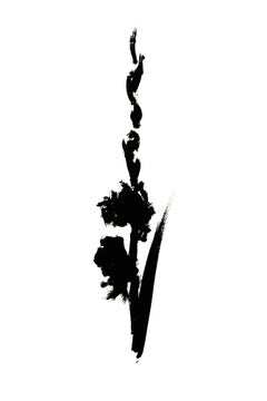 Botanical Study · Gladiolus #4_Edition 1 of 10