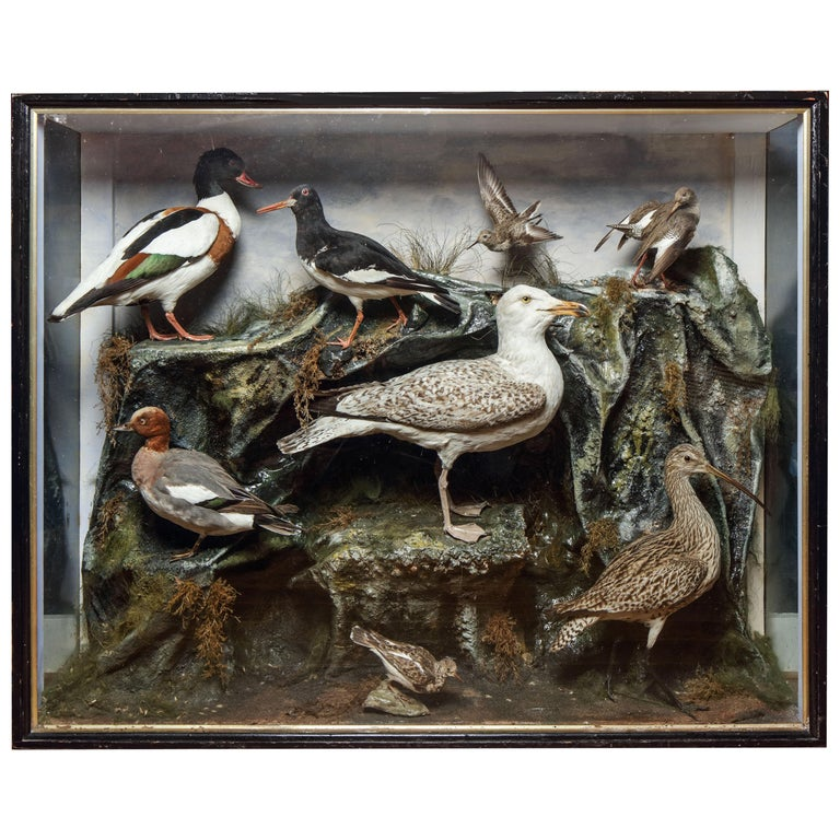 Very Large Edwardian Display Cabinet with Sea-Birds, circa 1900 For Sale