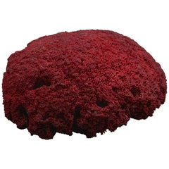 Very Large Red Pipe Organ Coral