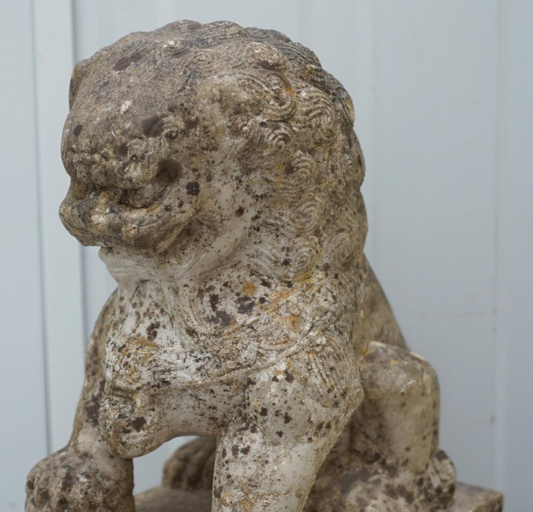 Very Rare Pair of 18th Century Chinese Marble Temple Lion Guardians Foo Dogs For Sale 2