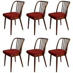 Very Rare Set of Six Dining Chairs by Antonin Suman for Jinota Sobeslav