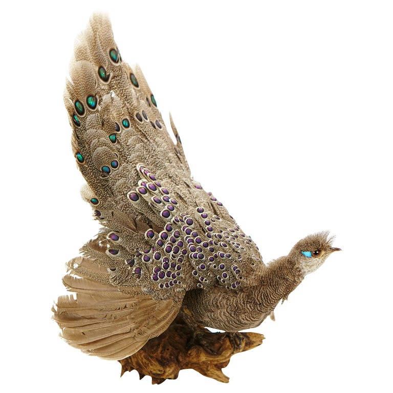 Vibrantly Coloured Peacock Pheasant Wall Mount, 20th Century For Sale