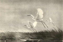 Andante (Two majestic water birds soar slowly over the marshland)