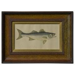 Victorian Bass Print