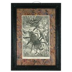 """Victorian """"Bird"""" Spider Print"""