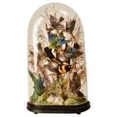 Victorian Dome Featuring Taxidermy Song Birds, England 19th C