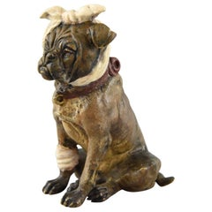 Vienna Bronze Sculpture English Bulldog with Bandage Austria 1920