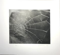 Vija Celmins, Spider Web; 2009; Screenprint; 17 1/2 x 19 inches; Edition of 117