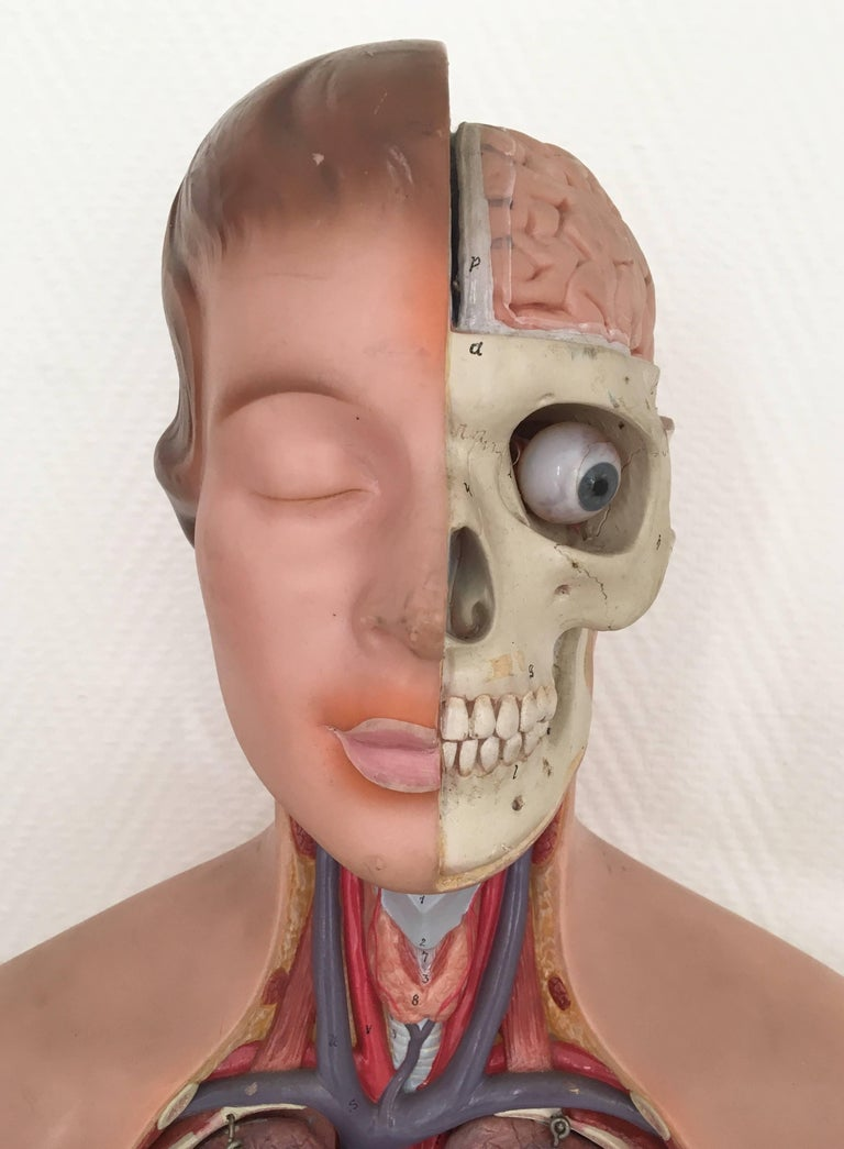 Vintage, Anatomical, Didactic Torso, Female Bust with Head, Somso, 1960s In Good Condition For Sale In Schagen, NL