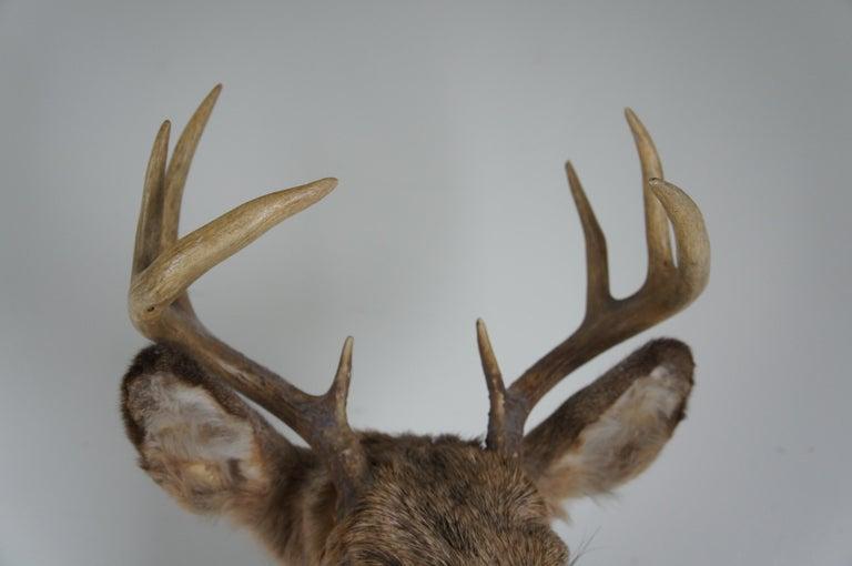 20th Century Vintage 8 Point Taxidermy Deer Head Trophy Mount Antlers Rack