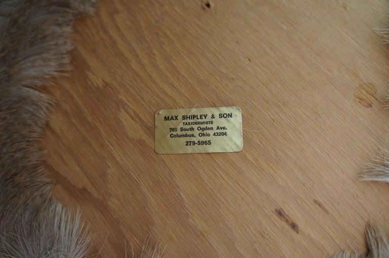 Vintage 8 Point Taxidermy Deer Head Trophy Mount Antlers Rack 4