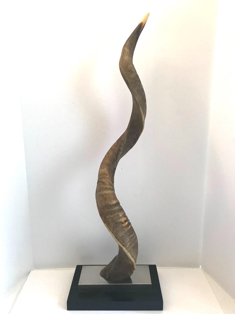 Exotic African Lesser Kudu horn sculpture mounted on stand. The sculpture has a stepped base design in chrome and black lacquered wood. Stunning from all angles.