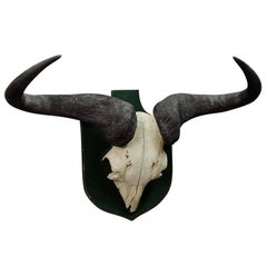 Vintage African Water Buffalo Trophy Wall Mount