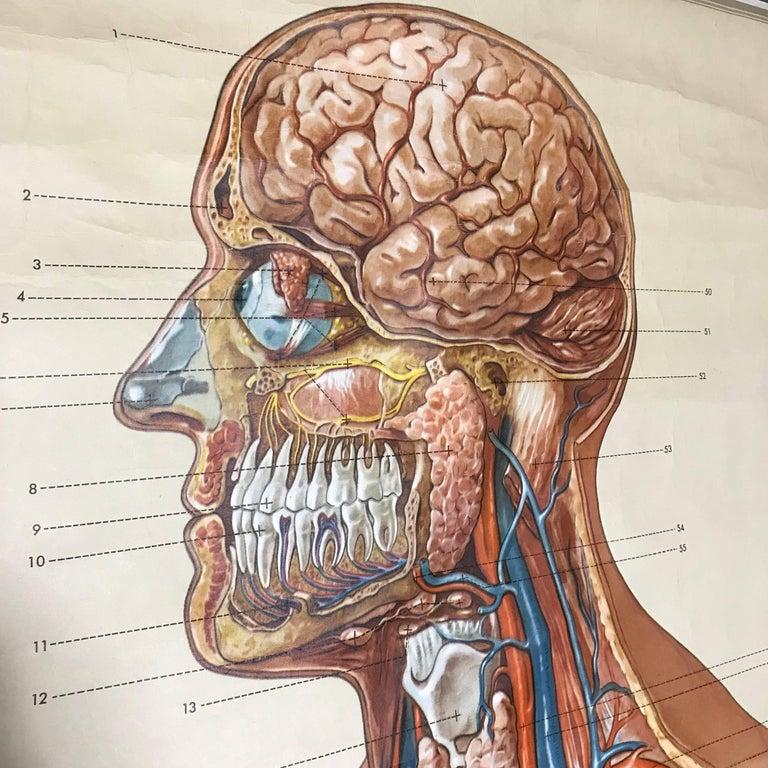 Groß Vintage Anatomie Charts Fotos - Menschliche Anatomie Bilder ...