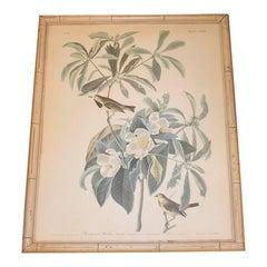 Vintage Audubon Bachmans Warbler No 37 Print