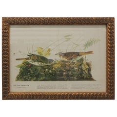 Vintage Bird Print in Gold Frame