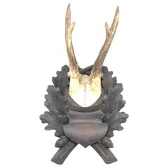 Vintage Black Forest Deer Antler Trophy on Wood Carved Plaque, German, 1900s