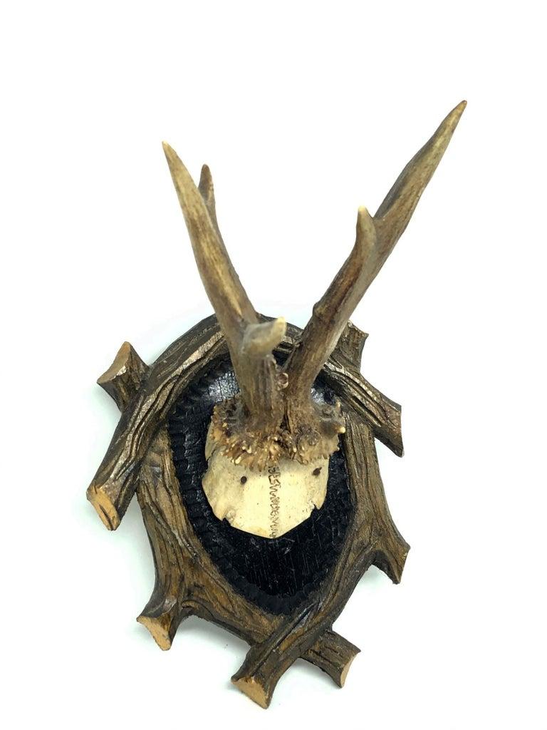 Hand-Carved Vintage Black Forest Deer Antler Trophy on Wood Carved Plaque, German, 1950s For Sale